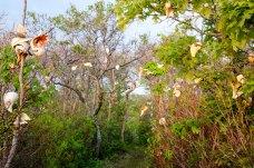 spring_conch_tree2