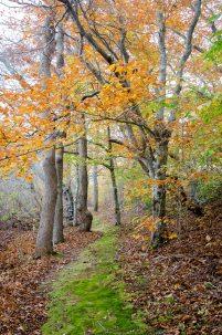 Green Velvet Path through the Autumn Woods
