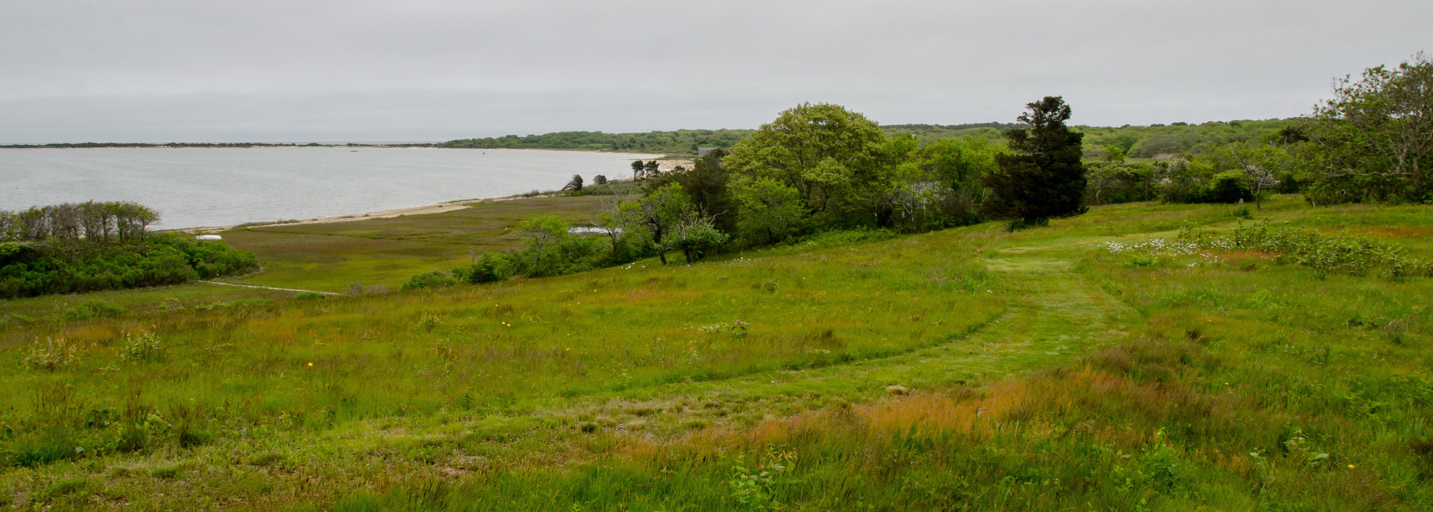 Cape Pogue hillside